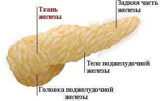 Некроз головки, хвоста поджелудочной железы